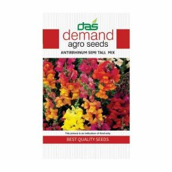 DAS agro seeds ( Antirrhinum semi tall mix )