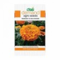DAS agro seeds ( Marigold F1 INCA Orange ) 20 Seeds