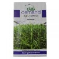 DAS agro seeds ( Rosemary ) 20 Seeds