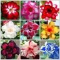 Garden Flower Seeds