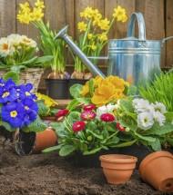 Nursery & Gardening