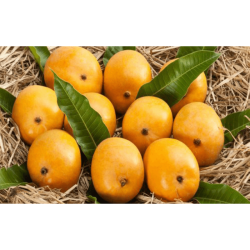Ratnagiri Alphonso Hapus 1 Dozen Premium Quality